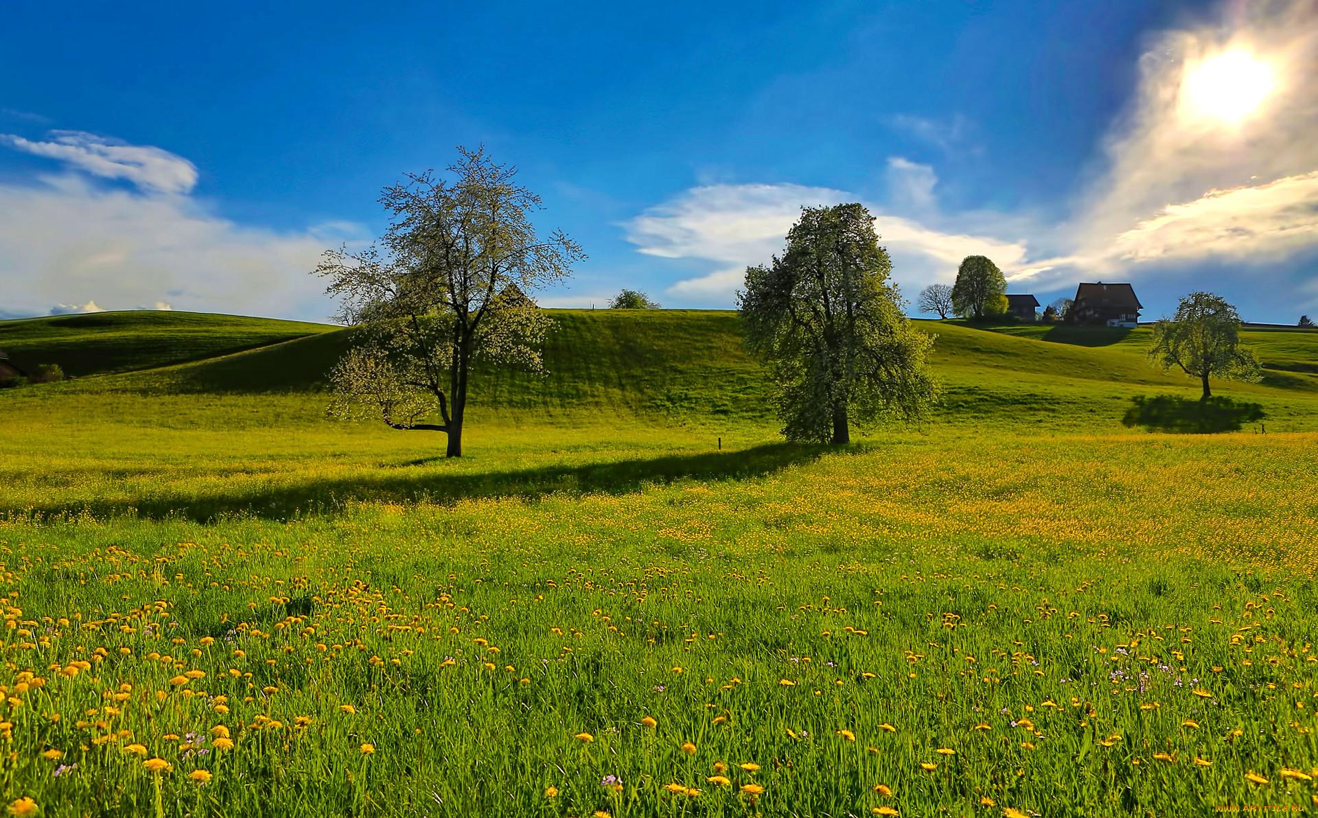 фото красивые пейзажи луга и поля формировать практические навыки